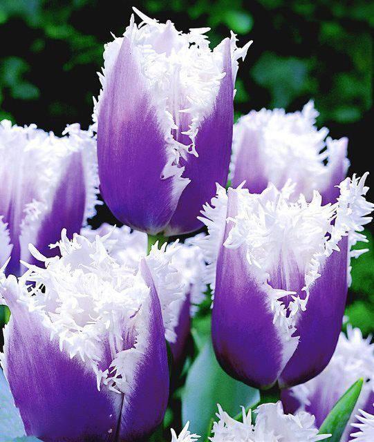 Gut gemocht 132 best Les plus belles FLEURS DU MONDE images on Pinterest  HJ12