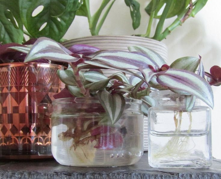 les 14 meilleures images du tableau orchid e sur pinterest fleurs exotiques soin pour les. Black Bedroom Furniture Sets. Home Design Ideas