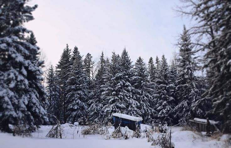 Winter on the acreage, Central Alberta