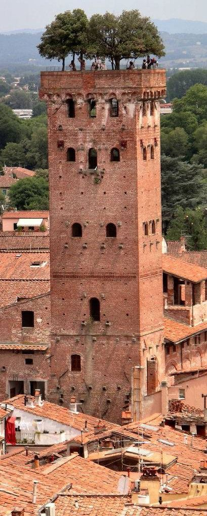 The Guinigi Tower in Lucca, Italy, constructed in the 1300s.