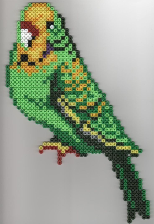 perruche parakeet hama beads by florimence