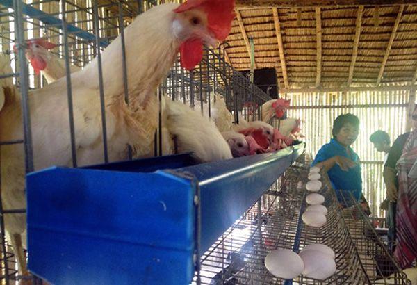 DA upbeat bird flu has been contained - Philippine Star