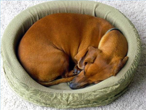 How to Make a Heated Dog Bed