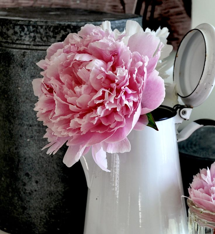 ROMANTISK HAGE : Huskeliste for peoner - hagens vakreste staude