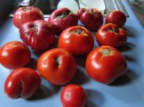 big batch summer tomato sauce how to make big batch summer tomato ...