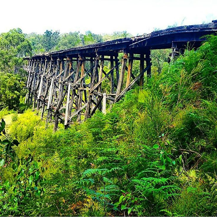 The historic Stony Creek Trestle Bridge in Nowa Nowa, East Gippsland. Photo by @fitaussietraveller on Instagram