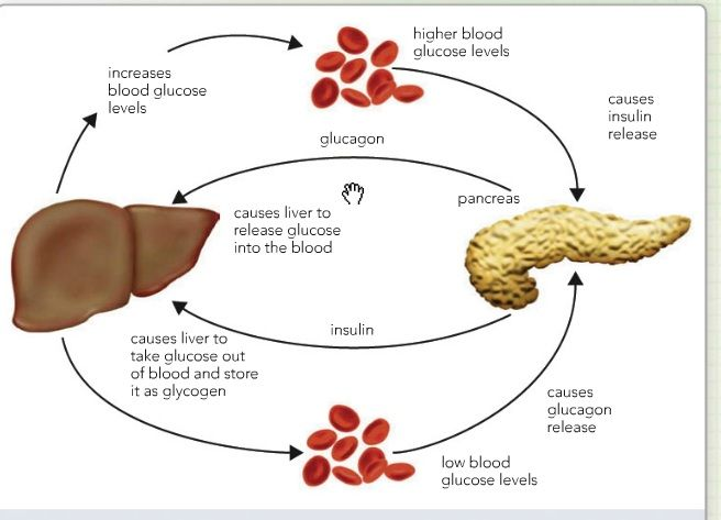 monitoring blood glucose levels essay