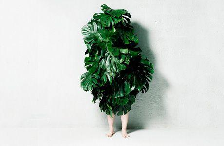 Leaf Man by Azuma Makoto
