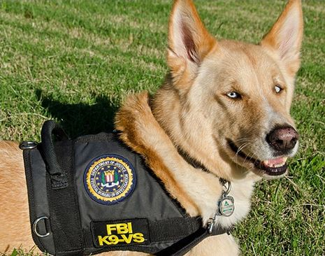 The FBI's first therapy dogMeeting Dolce, Dogs Programs, Therapy Dogs, Service Animal, Service Dogs, Police Dogs, Fbi Therapydog, Therapydog Servicedog, Servicedog Victimspecialist