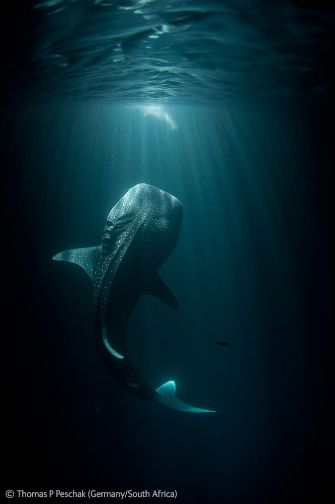 Concours photo : meilleurs clichés Veolia Environnement Wildlife 2012
