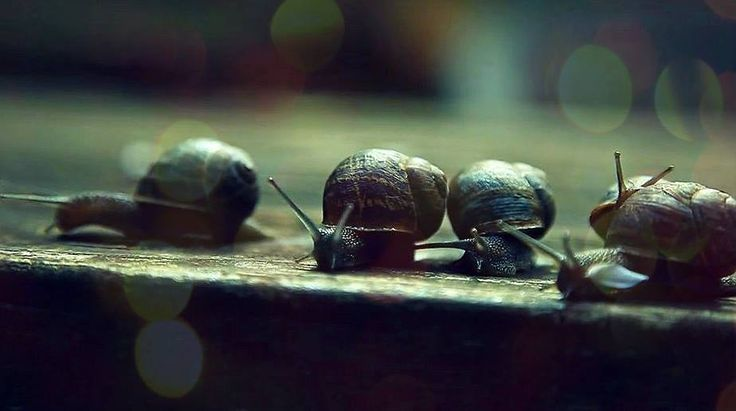 Imitate the snail in deliberation, the bird in execution. Latin proverbs *
