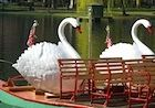 Things to do in Boston, MA with kids.  Swan Boats in Boston's Public