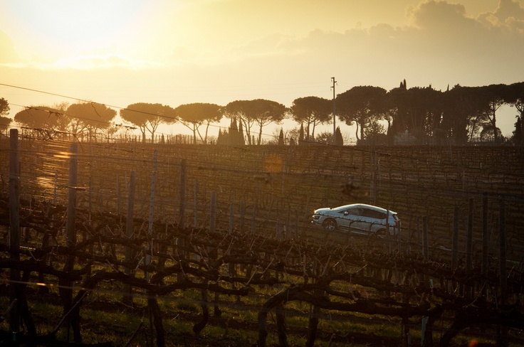 our vineyards at sunset    le nostre vigne al tramonto
