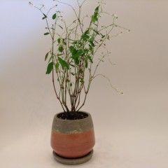 ユーフォルビア グリッツ  植木鉢セット #0118