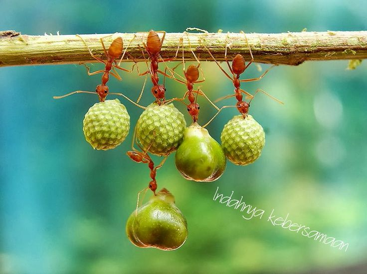 Banyak pembelajaran yang kita ambil dari semut
