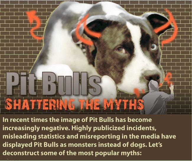 Are pit bulls dangerous
