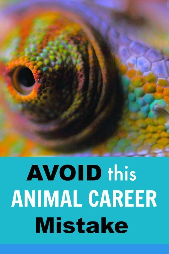 are you making this common animal career mistake i certainly made it in my journey to discovering my dream animal career - Jobs With Animals Best Jobs Working With Animals