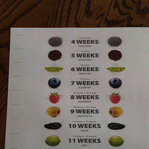 Personalized Pregnancy Countdown Poster with Food Size Comparison | Etsy   – David y maría