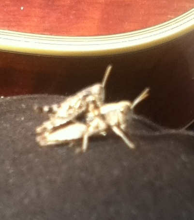 Spunky crickets