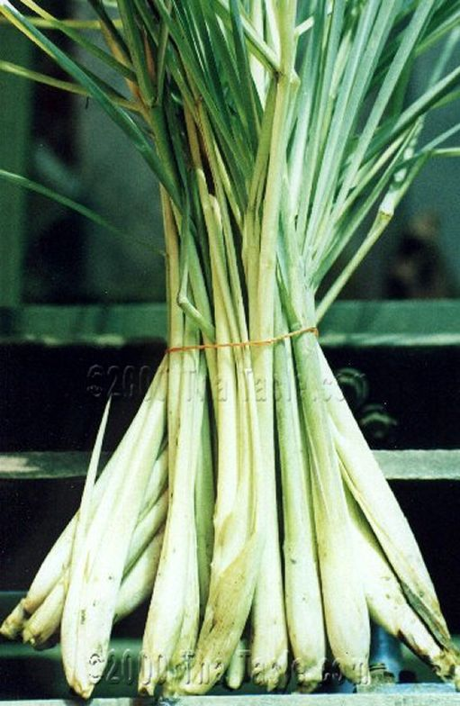 Lemongrass   well worth growing -gets HUGE in a season and can easily be frozen for winter use. Make sure to get the true Thai lemongrass Cymbopogon citratus NOT the East Indian lemongrass that looks similar but does not have the thick fleshy bulbous base needed for cooking