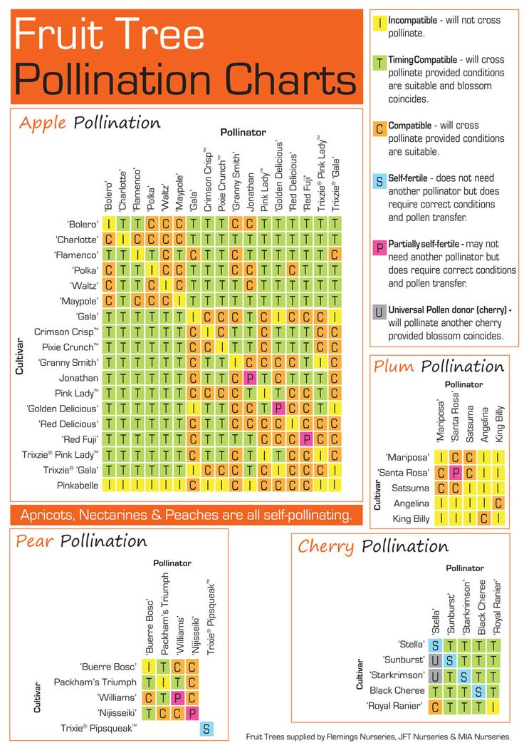 Fruit Tree Pollination Charts: apple, plum, cherry, pear from http://flowerpower.com.au/information/fact-sheets/fruit-tree-pollination/