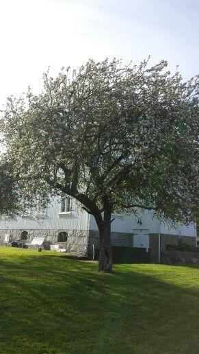 Apletree