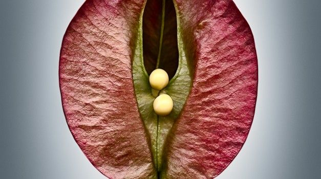 La belleza de la vida se plasma en las semillas, mira estas hermosas imágenes   - VeoVerde