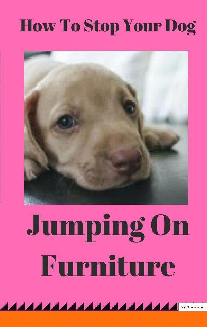 Dog Obedience Training Tips Dogobediencetrainingtips Dog