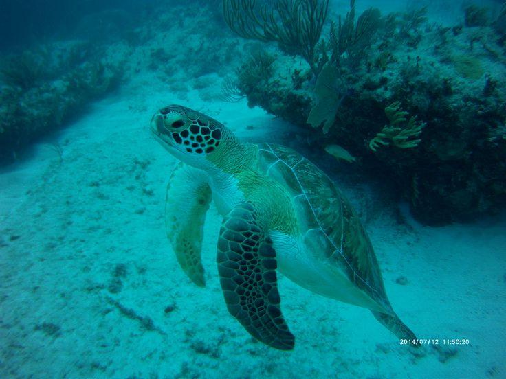 http://www.todotulum.com/tulum-mexico-dive/scuba-7/