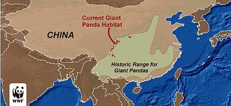 Shrinking habitat of the giant panda - china