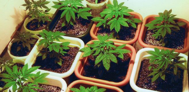 Fertilizers, Supplements and Cannabis Nutrients:
