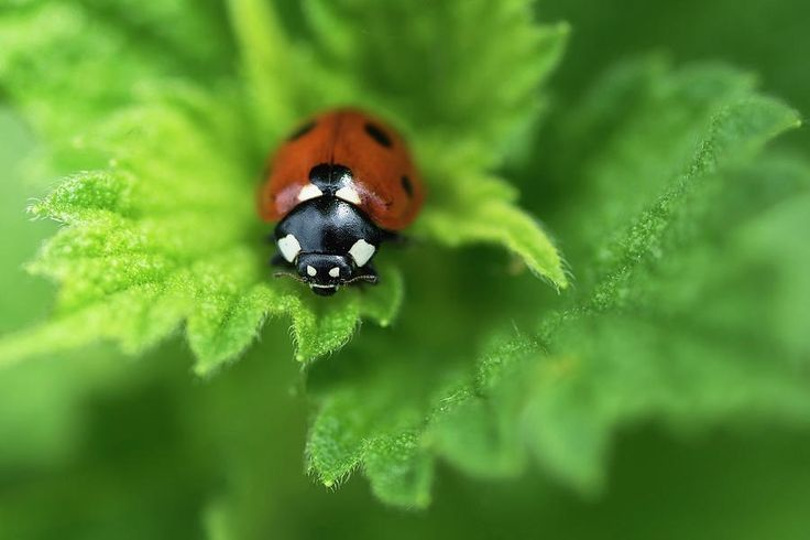 Season Photograph - Ladybird Is A Symbol Of Well-being, Goodness And Peace by Irina Safonova#IrinaSafonova#Works #FineArtPhotography #HomeDecor#IrinaSafonovaFineArtPhotography #ArtForHome #FineArtPrints #HomeDecor #Animal #bug#Flora#Flower