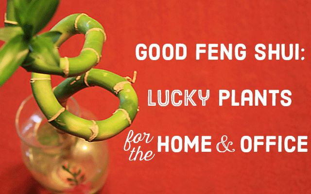 Lucky Plants & Bonsai: Good Feng Shui for Home and Work
