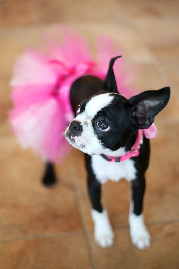 Dressed up dog for a wedding with a pink tutu :) From Madeline Island Wedding - Laura Schmitt Photography