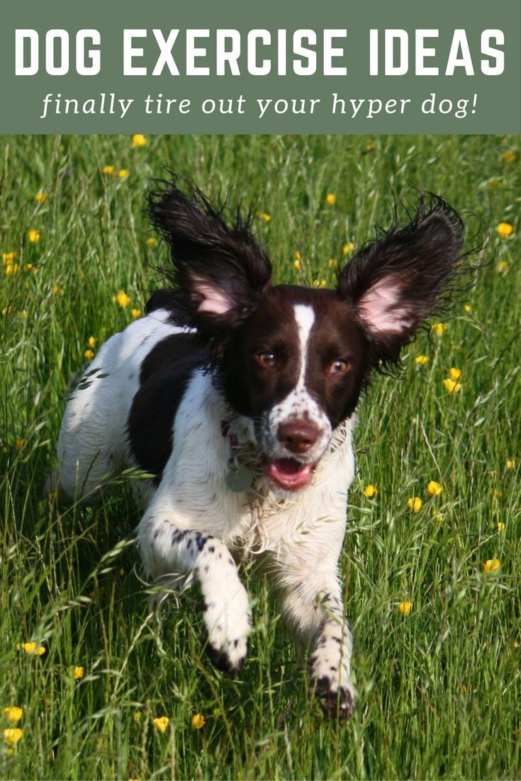 Dog Exercise Ideas For Hyper Dogs How To Finally Tire Out Your