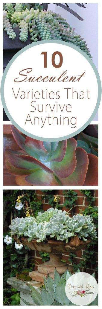 10 Succulent Varieties That Survive Anything| Succulents, Varieties of Succulents, Easy to Grow Succulents, Growing Succulents, Gardening Tricks, Gardening TIps, Gardening 101, Gardening for Beginners, Popular Pin