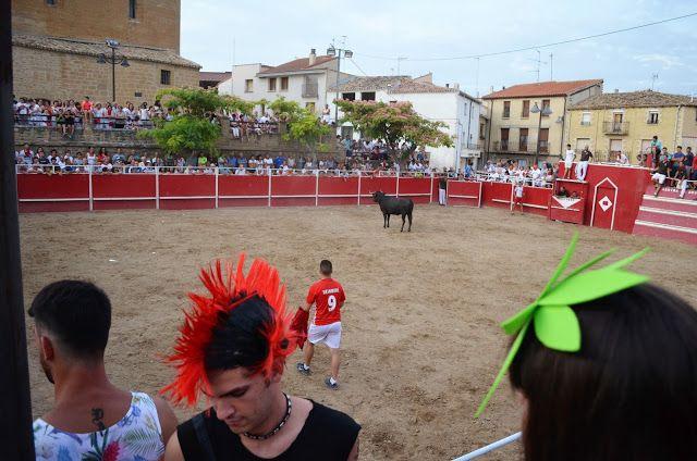Santacara: Vacas de Pedro Domínguez de Funes (6)