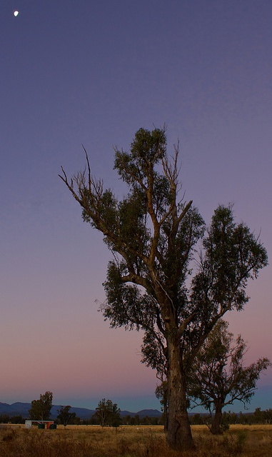 This photo was taken in the small rural town of Narrabri in northwest NSW.  I like how the tree branches seem to be reaching for the moon in the top left.