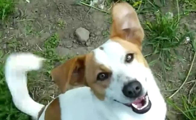 Daily Cute: Adopted Dogs Can't Contain Their Excitement | Care2 Causes