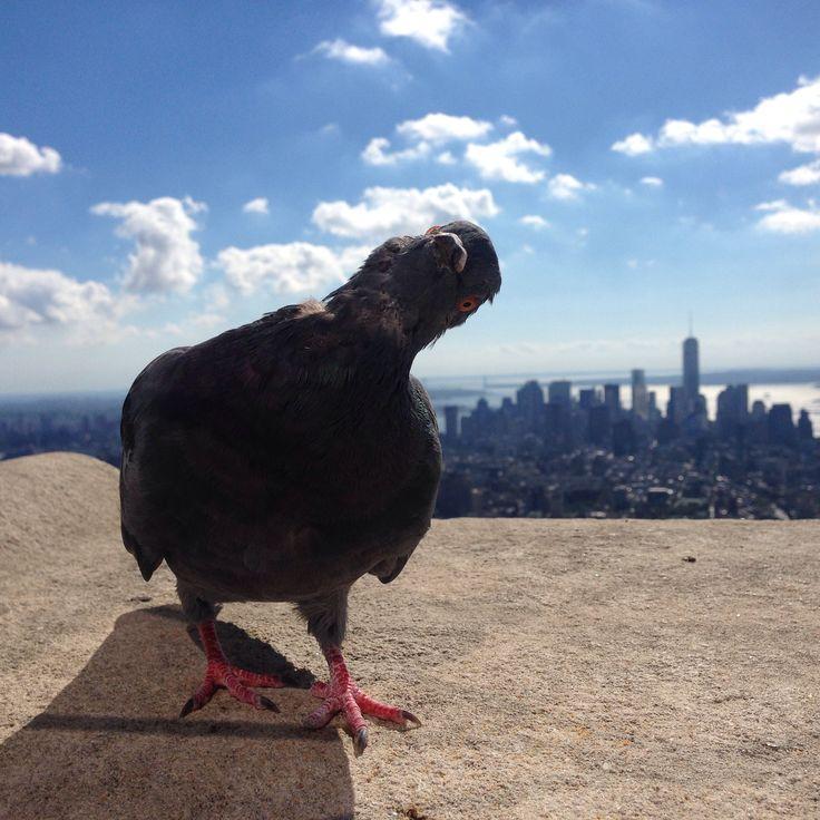 Dove NYC
