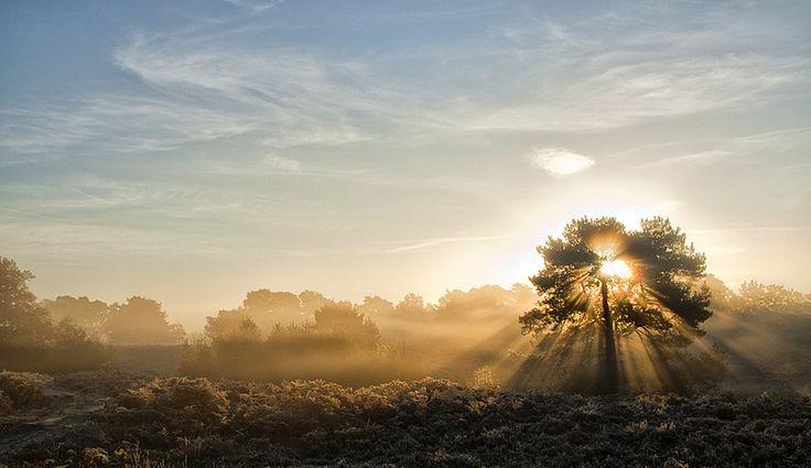 Nevel, zon, herfst... prachtige plaat van Peter Reinders.