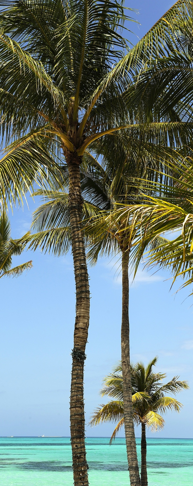 Catch some shade on the beach in Nassau Paradise Island, The Bahamas