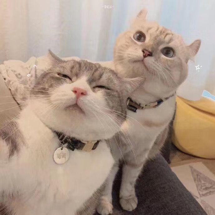 Double Cuteness In 2020 Cute Cat Memes Cute Cats Kittens Cutest