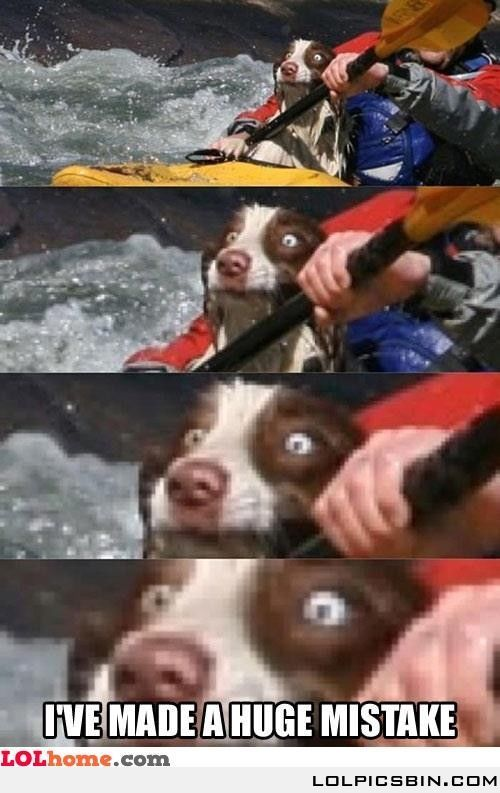 Loool this dog doesn't seem to like white water rafting..............