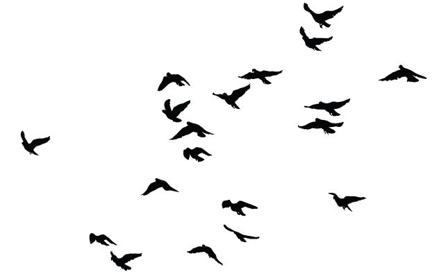 sparrow silhouette in flight google search cute tattoos rh pinterest com vector birds flying vector birds illustration