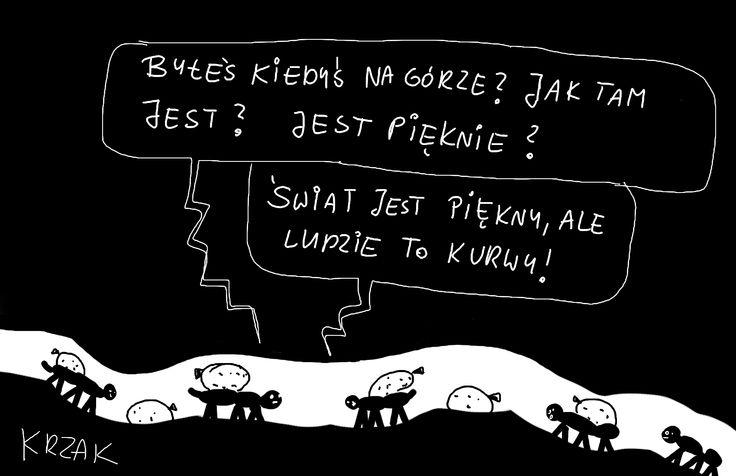 #robaki
