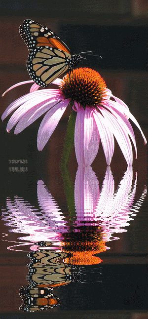 beautiful flower gif | Butterflies, Animated Gifs, Flores, Flowers, Beautiful Flowers ...