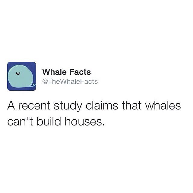 25+ best ideas about Whale facts on Pinterest | Blue whale facts ...
