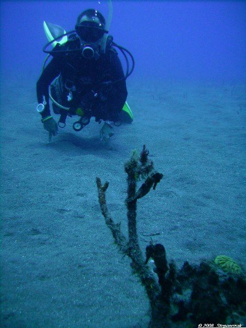 25 best Saba Diving images on Pinterest   Diving, Scuba diving and ...