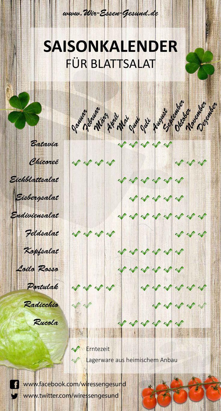 infografik: saisonkalender für heimischen blattsalat (wir-essen-gesund.de)